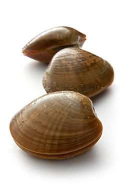 Clams with closed shells